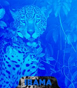 Pacote completo para Técnico Administrativo do IBAMA